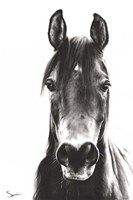 Horse Portrait Fine Art Print