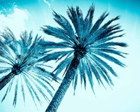 Chic Palms Fine Art Print