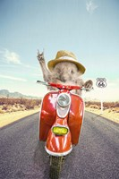 Hedgehog Traveler Fine Art Print