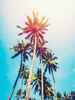 Palms in the Sun Fine Art Print