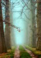 Blue Mist Fine Art Print
