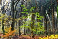 Colors of the Forest IV Fine Art Print