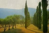 Cypress Shadows Fine Art Print