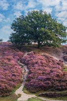Purple Heath Fine Art Print