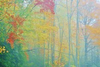 Autumn's Palette Fine Art Print