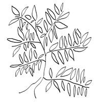 A Black and White Tree Fine Art Print