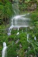 Moss Waterfall Fine Art Print