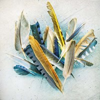 Feather Study No. 3 Fine Art Print