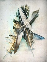 Feather Study No. 5 Fine Art Print