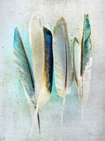 Feathers Turquoise Fine Art Print