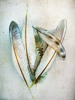 Hen Feathers Fine Art Print