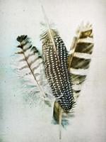 Owl - Guinea Feathers Fine Art Print