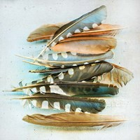 Spotted Feather Study Fine Art Print