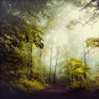 Glorious Woods Fine Art Print