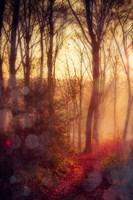 Seasons Light Fine Art Print