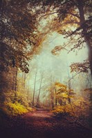 Silent Forest Fine Art Print