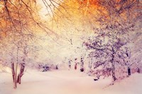 Snowy Sunrise Fine Art Print