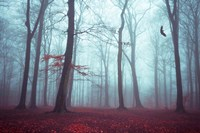 Solstice in Fog Fine Art Print