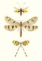 Entomology Series I Fine Art Print