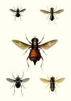 Entomology Series III Fine Art Print