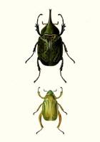 Entomology Series IV Fine Art Print