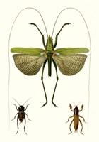 Entomology Series V Fine Art Print