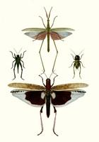 Entomology Series VI Fine Art Print