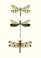 Entomology Series VII Fine Art Print