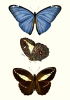 Entomology Series VIII Fine Art Print