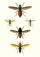 Entomology Series IX Fine Art Print