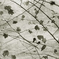 Laced Sky II Framed Print