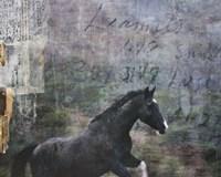 Horse Exposures I Fine Art Print