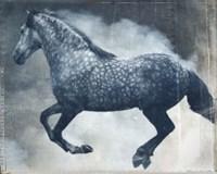 Horse Exposures III Fine Art Print