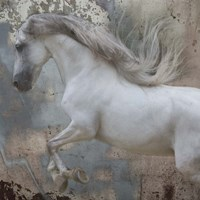 Horse Exposures IV Fine Art Print