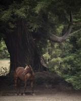 Horse in the Trees II Fine Art Print
