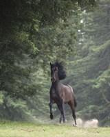 Horse in the Trees III Fine Art Print