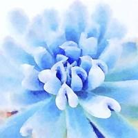 Succulente III Fine Art Print