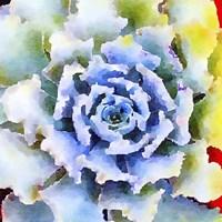 Succulente VII Fine Art Print