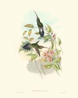 Hummingbird Delight I Fine Art Print