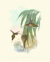 Hummingbird Delight III Fine Art Print
