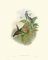 Hummingbird Delight IV Fine Art Print