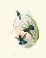 Hummingbird Delight VI Fine Art Print