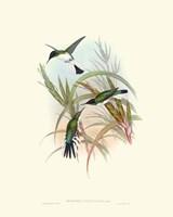 Hummingbird Delight VII Fine Art Print