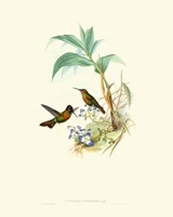 Hummingbird Delight X Fine Art Print