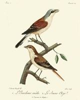 Vintage French Birds I Fine Art Print