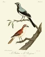 Vintage French Birds II Fine Art Print