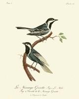 Vintage French Birds III Fine Art Print