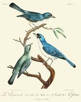 Vintage French Birds IV Fine Art Print