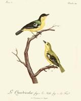 Vintage French Birds V Fine Art Print