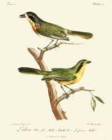 Vintage French Birds VI Fine Art Print